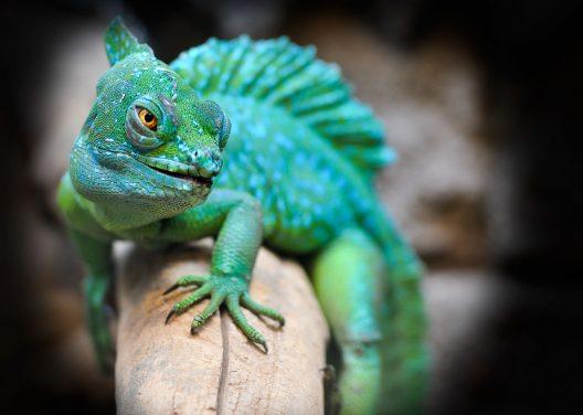 Aprende mas sobre el Zoologico de cali de colombia